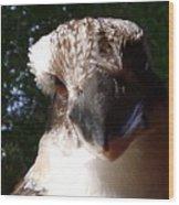 Australia - Kookaburra Up Close Wood Print