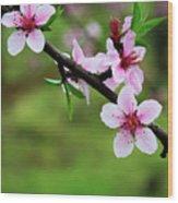 Blossoming Peach Flowers  Closeup Wood Print