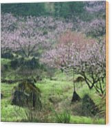 Blossoming Peach Flowers In Spring Wood Print