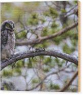 Hawk Owl Wood Print