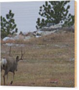 10 Point Buck Heads West Wood Print