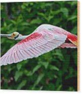 Roseate Spoonbill In Flight Wood Print