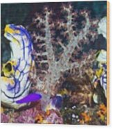 Sea Squirts Wood Print by Georgette Douwma
