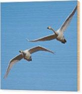 Whooper Swans Wood Print