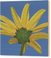 Wild Sunflower Stony Brook New York  Wood Print
