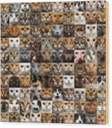 100 Cat faces Wood Print