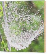 10000-spider Web1 Wood Print