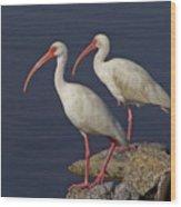100b5790 White Ibis Wood Print