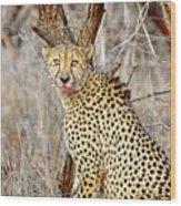 1022 Cheetah Wood Print