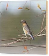 105319 - Bluebird Wood Print