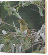 Bellbird Wood Print