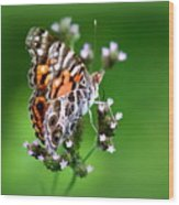 1074- Butterfly Wood Print