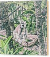 10773 Cotton Topped Tamarin Wood Print