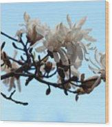 Magnolia Blossoms Wood Print