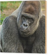 10898 Gorilla Wood Print