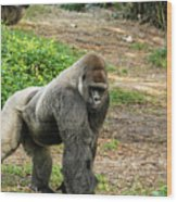 10899 Gorilla Wood Print