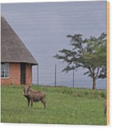 South Africa Wood Print
