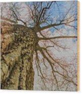10913 I Am Groot Wood Print