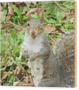11-2-17--3626 The Appreciative Squarel, Don't Drop The Crystal Ball Wood Print