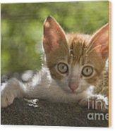 Kitten On A Wall Wood Print