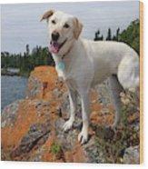 Betsy On Horseshoe Bay Island Wood Print