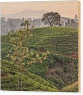 Nuwara Eliya - Sri Lanka Wood Print