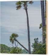 Palmetto Forest On Hunting Island Beach Wood Print