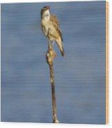 Sedge Warbler Wood Print