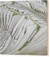 Terrace Fields Scenery In Spring Wood Print
