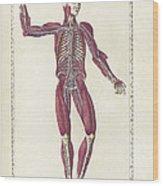 The Science Of Human Anatomy Wood Print