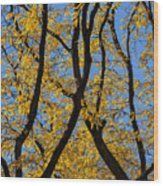 Fall Foliage Wood Print