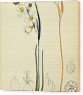 Illustrations Of The Flowering Plants And Ferns Of The Falkland Islands Wood Print