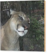 1153 - Mountain Lion Wood Print