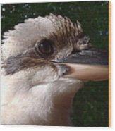 Australia - Kookaburra Poses Wood Print