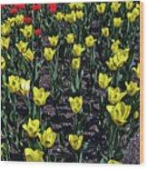 Flower Carpet. Wood Print