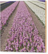 Hyacinths Fields Wood Print