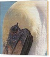 Pelican Up Close Wood Print