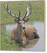 12 Point Buck Wood Print