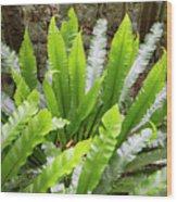 Rainforest At Foxground, Kiama Wood Print