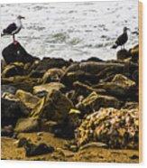 Ca Bird Wood Print