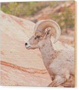 Desert Bighorn Ram Wood Print