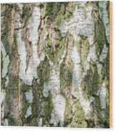 Detail Of Brich Bark Texture Wood Print