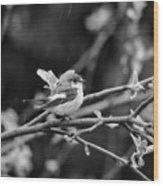 European Pied Flycatcher Wood Print