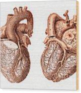 Heart, Anatomical Illustration, 1814 Wood Print
