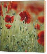 Summer Poppy Meadow Wood Print