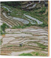 Longji Terraced Fields Scenery Wood Print