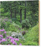 Alaska_00014 Wood Print