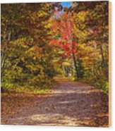 Autumn Season In Killarney Wood Print