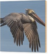 Beautiful Pelican Wood Print