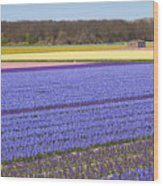 Hyacinths Fields Wood Print